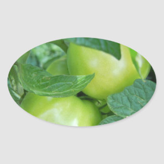 Tomatoes On The Vine Oval Sticker
