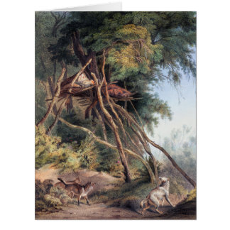 Tombs of Assiniboin Indians on Trees - Karl Bodmer Card