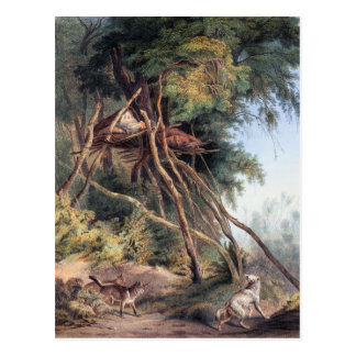 Tombs of Assiniboin Indians on Trees - Karl Bodmer Postcard
