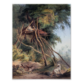 Tombs of Assiniboin Indians on Trees - Karl Bodmer Poster