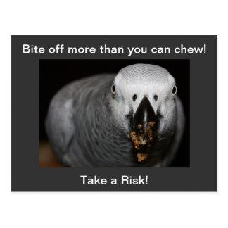 ¡Tome un riesgo! Postal del loro del gris africano
