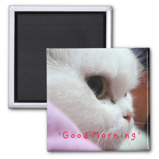 Tommy 1 2 inch square magnet