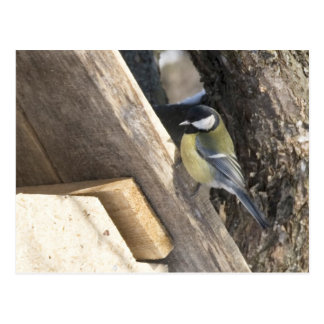 tomtit_1 post card