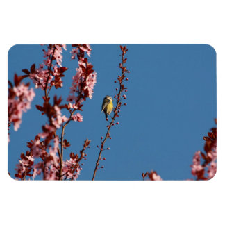 tomtit in blooming cherry plum tree magnet
