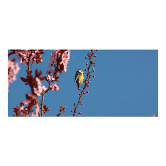 tomtit in blooming cherry plum tree rack card