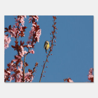 tomtit in blooming cherry plum tree yard sign