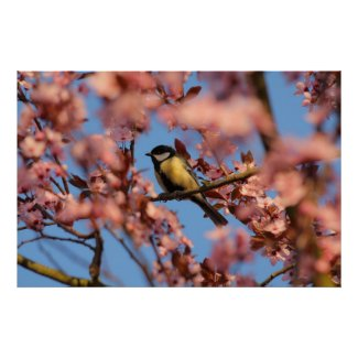 tomtit in blooming tree posters