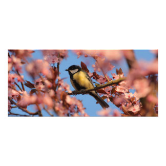 tomtit in blooming tree rack card