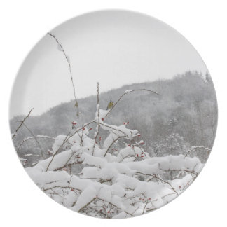 tomtit in winter plate