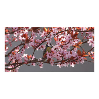 tomtit sitting in blooming cherry plum tree card