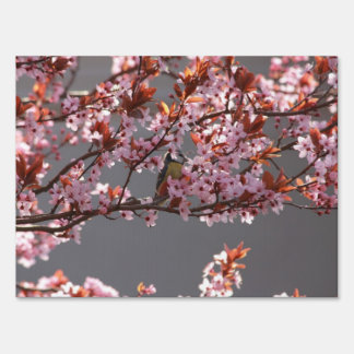 tomtit sitting in blooming cherry plum tree lawn sign