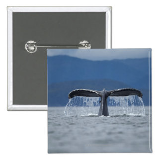 Tongass National Forest, Humpback 2 Inch Square Button