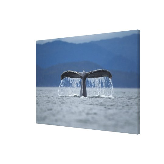 Tongass National Forest, Humpback Canvas Print