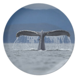 Tongass National Forest, Humpback Party Plates