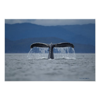 Tongass National Forest, Humpback Poster