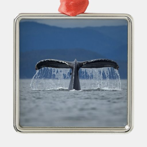 Tongass National Forest, Humpback Square Metal Christmas Ornament