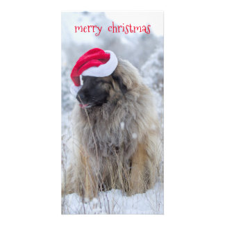 tongue out Leonberger Card