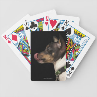Tongue out of black and White Rat Terrier Bicycle Playing Cards