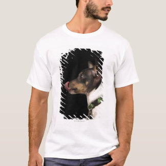 Tongue out of black and White Rat Terrier T-Shirt