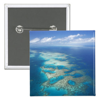 Tongue Reef, Great Barrier Reef Marine Park, Buttons