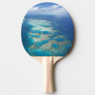 Tongue Reef, Great Barrier Reef Marine Park, Ping Pong Paddle