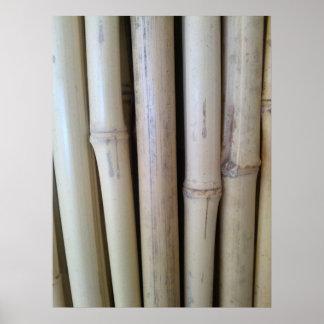 Tonkin Bamboo Canes Print