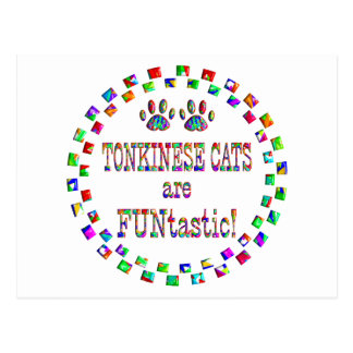 Tonkinese Cats are FUNtastic Postcard