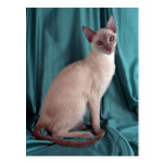 Tonkinese, lilac postcard