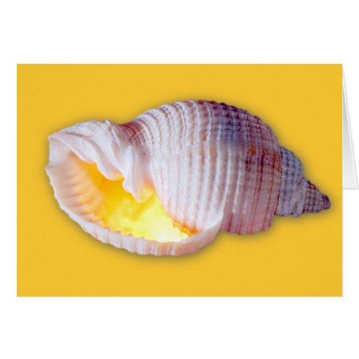 Tonna Tessellata Card