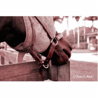 tono rojo marrón del nom del nom del caballo esculturas fotograficas