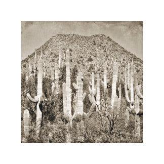 Tonto Saguaro Canvas