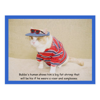 Too Cool Bubba Kitty Post Card