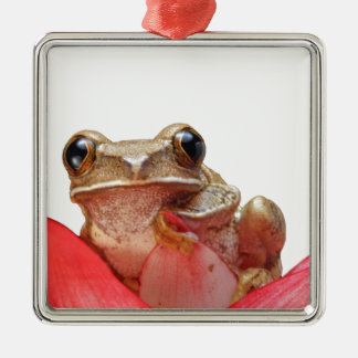 Too Cool Daisy Frog Metal Ornament