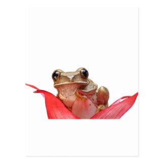 Too Cool Daisy Frog Postcard
