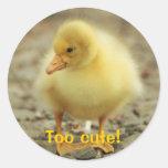 Too cute! classic round sticker