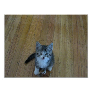 Too Cute! Kitten Poster