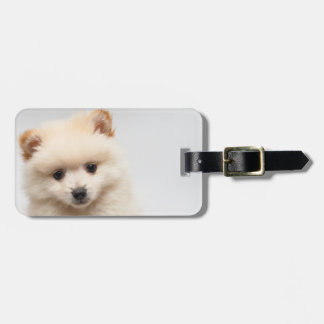Too Cute Pomeranian Bag Tag