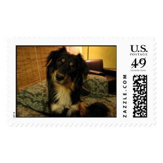 Too Darn Cute Stamp