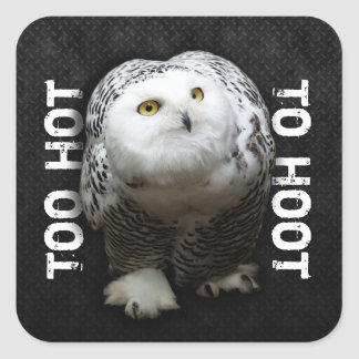 Too Hot To Hoot Square Sticker