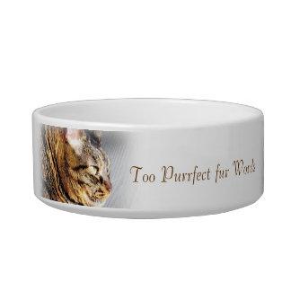 Too Purrfect fur Words Tabby cat pet food bowl