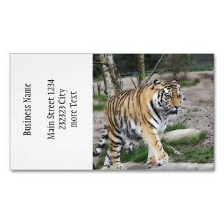 toony tiger magnetic business cards (Pack of 25)