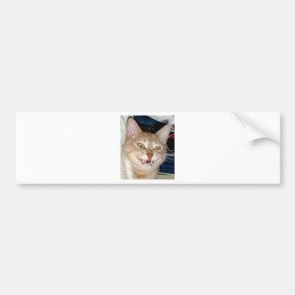 TOOTHY CAT CAR BUMPER STICKER