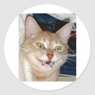 TOOTHY CAT CLASSIC ROUND STICKER