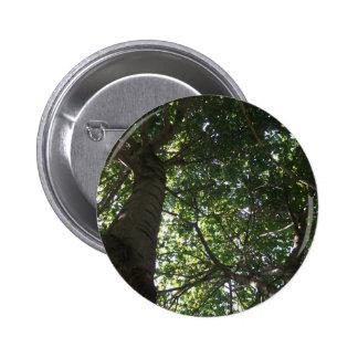 Top del árbol pins