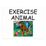 TOP Exercise Animal Postcard