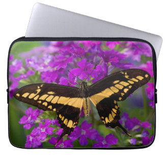 Top of a swallowtail butterfly computer sleeve
