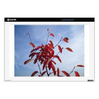 """TOP OF AUTUMN TREE DECALS FOR 17"""" LAPTOPS"""