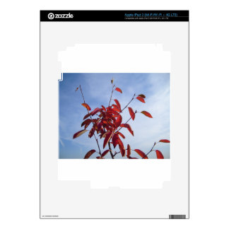 TOP OF AUTUMN TREE DECALS FOR iPad 3