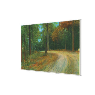 Top of Middle Ravine of Saratoga Battlefield Canvas Print