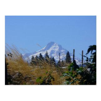 Top of Mt Hood Postcard